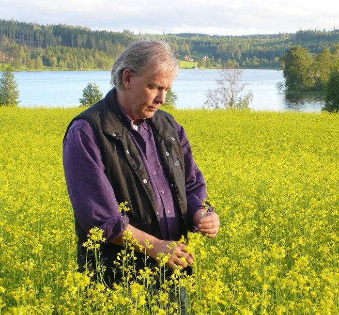 Svensk senap – bäst i världen